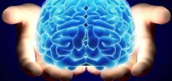 Beyni Taze ve Zinde Tutmanın Yolları
