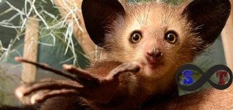 Dünyanın En İlginç Görünümlü Hayvanları