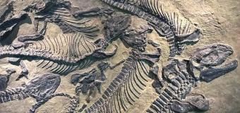 Fosil Nedir, Nasıl Oluşur ve Fosil Yakıtları Nelerdir?